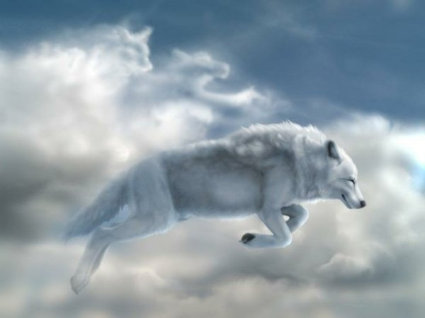 white_wolf