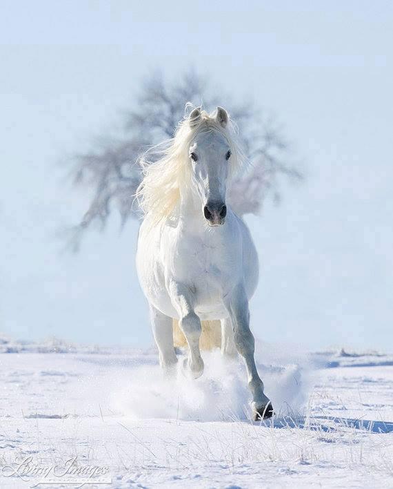 cal alb