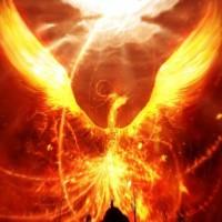 Phoenix_Bird-56179_200x200