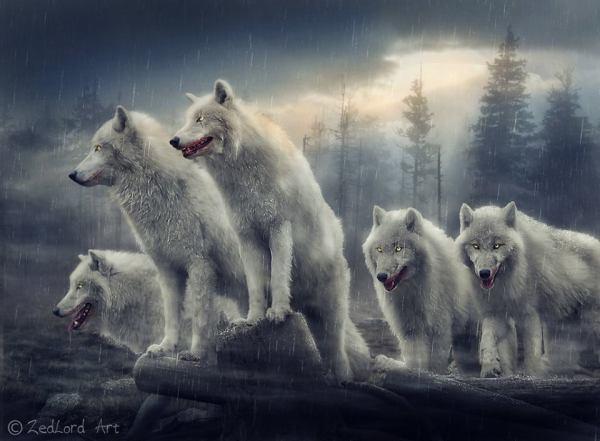 5 lupi