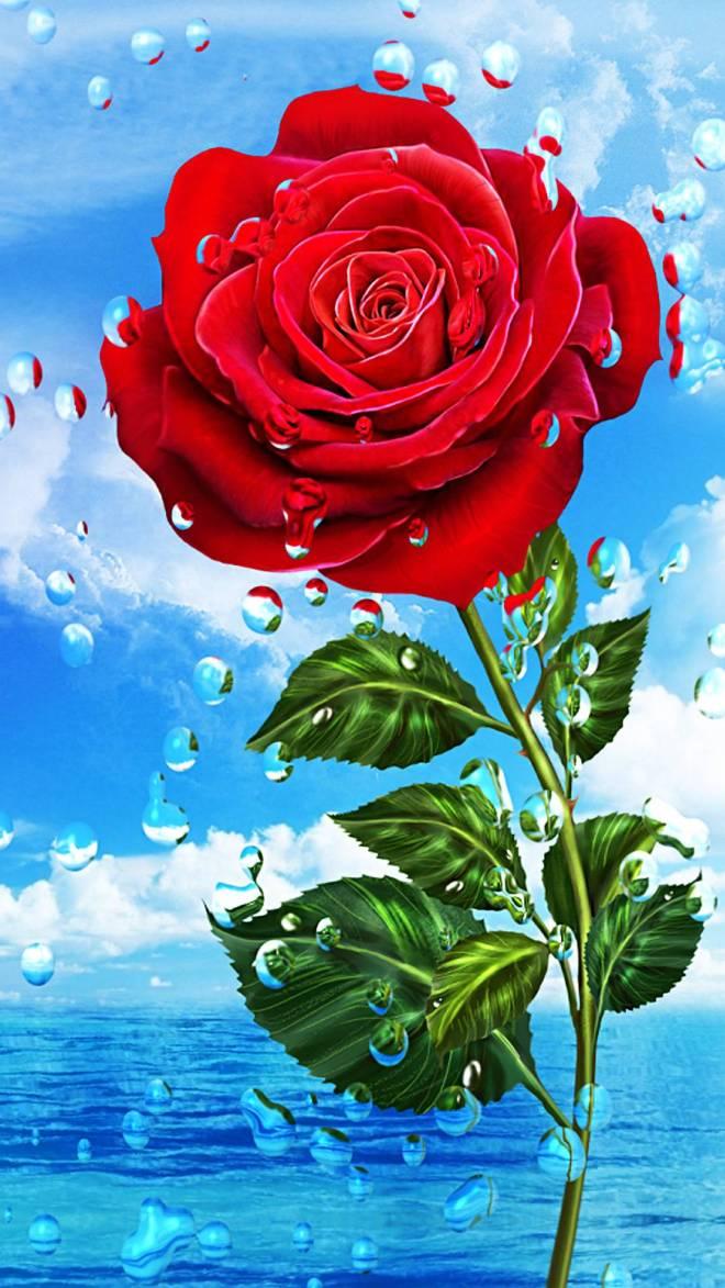rose-de63d0d9-1515-3d04-af2a-2ba717d9de04